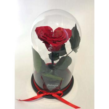 Red forever rose heart shape  glass