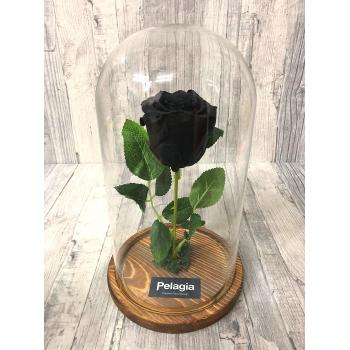 Black forever rose glass