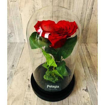 Red forever rose heart shape  glass