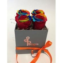 Forever Rose multicolor  in a box 4 pieces