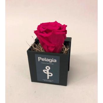 Forever Rose dark pink