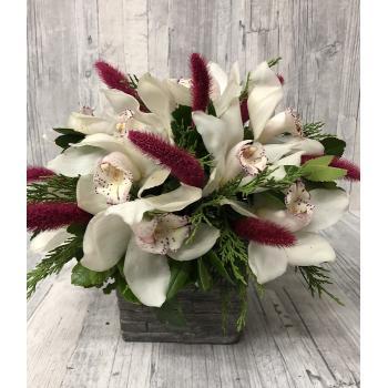 White orchids arrangement in ceramic pot